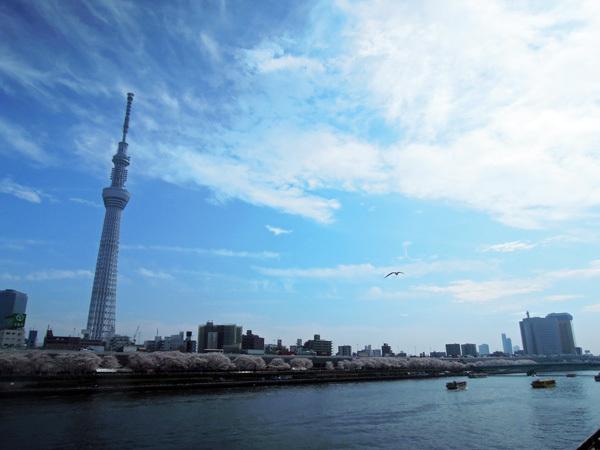 13.04.02_スカイツリーと桜1.JPG