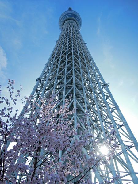 13.04.02_スカイツリーと桜2.JPG