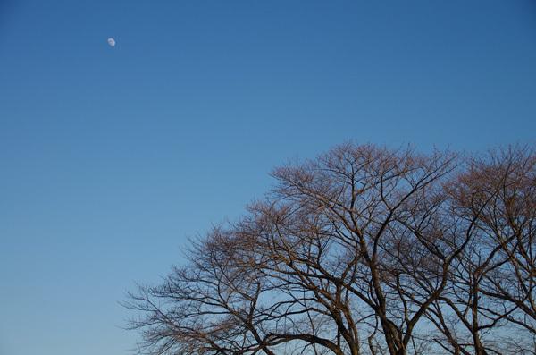 140112_桜と月.jpg
