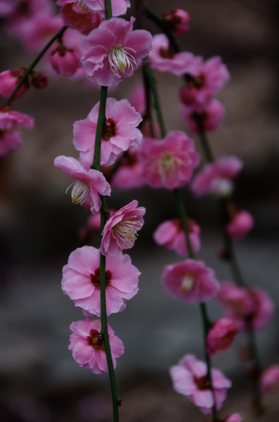 140311_香取神社6.jpg