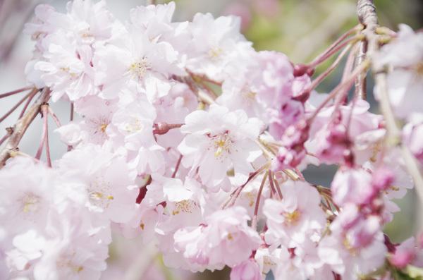 140528_目黒天空庭園3.JPG