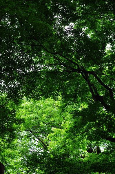 160427_新緑3.jpg
