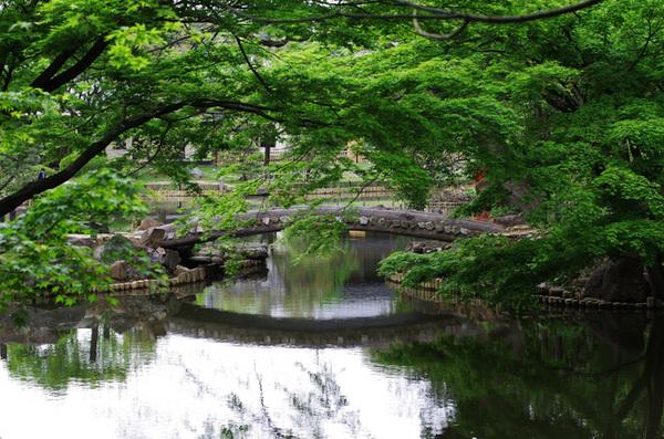 160429_新江戸川公園1.jpg