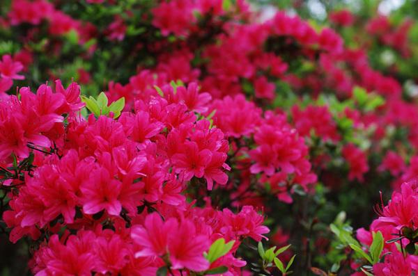 160429_新江戸川公園4.jpg