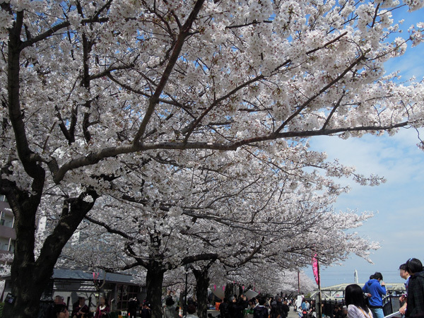 13.04.02_隅田公園桜.JPG