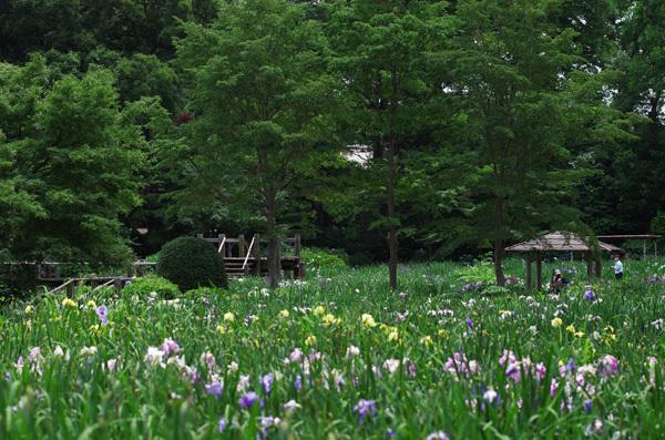 130723_染谷花しょうぶ園4.JPG