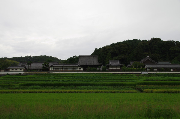 140102_橘寺1.JPG