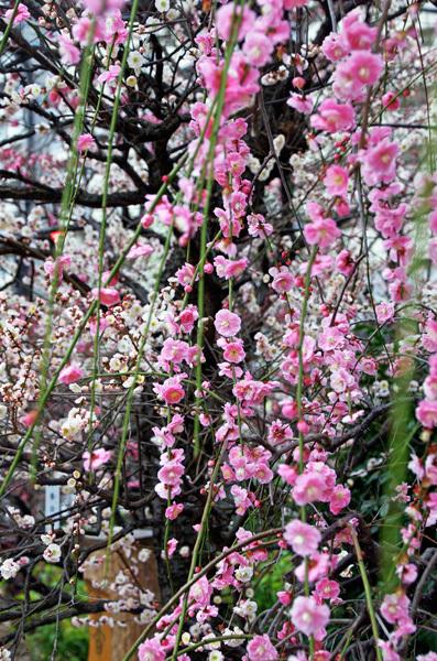 140311_香取神社3.jpg