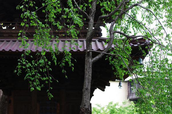 160428_椿山荘3.jpg